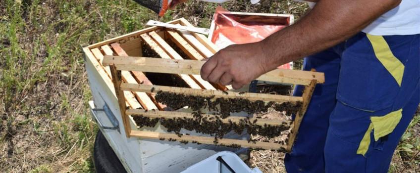 Cresterea si Selectia Matcilor: o abordare realista si bazata pe intelegerea albinei
