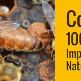 Concurs ApiExpert: 100 de Matci Imperecheate Natural