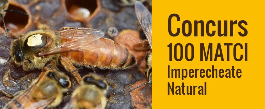 Castigatori Concurs 100 Matci Imperecheate Natural 2017