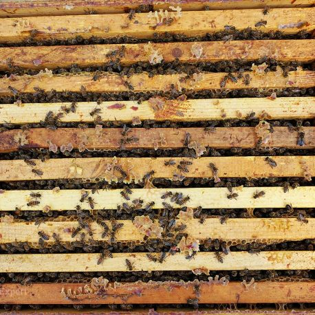 familii-albine-gal2
