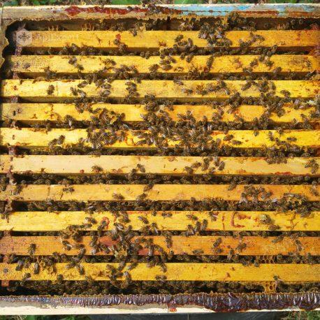 familii-albine-gal5
