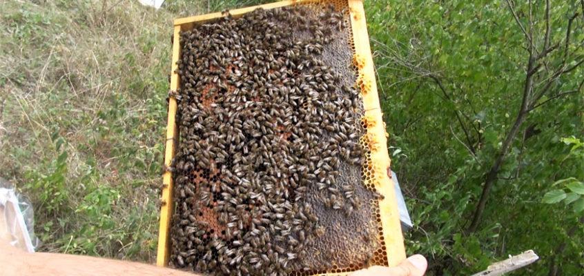 Verificare, hranire si extindere roiuri albine [Video]