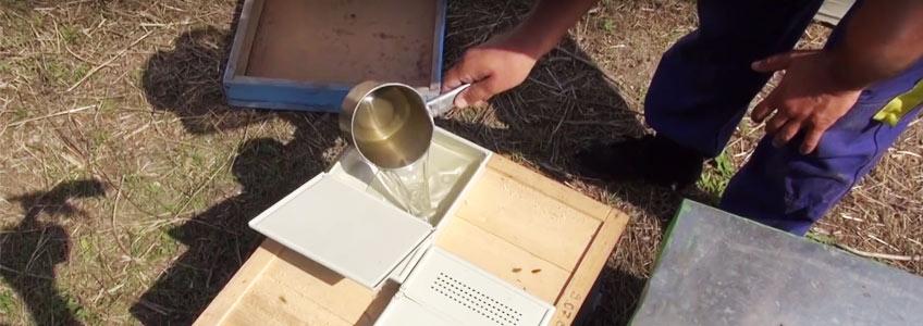 Hrana Energetica Pentru Albine: de ce sucroza (zaharul) reprezinta cea mai buna alternativa pentru hranirile suplimentare