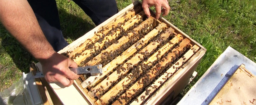 Extindere Roiuri Albine in Primavara [Video]